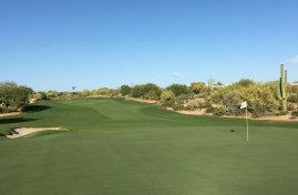 DesertForest15-GreenBack