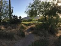 DesertForest17-Path