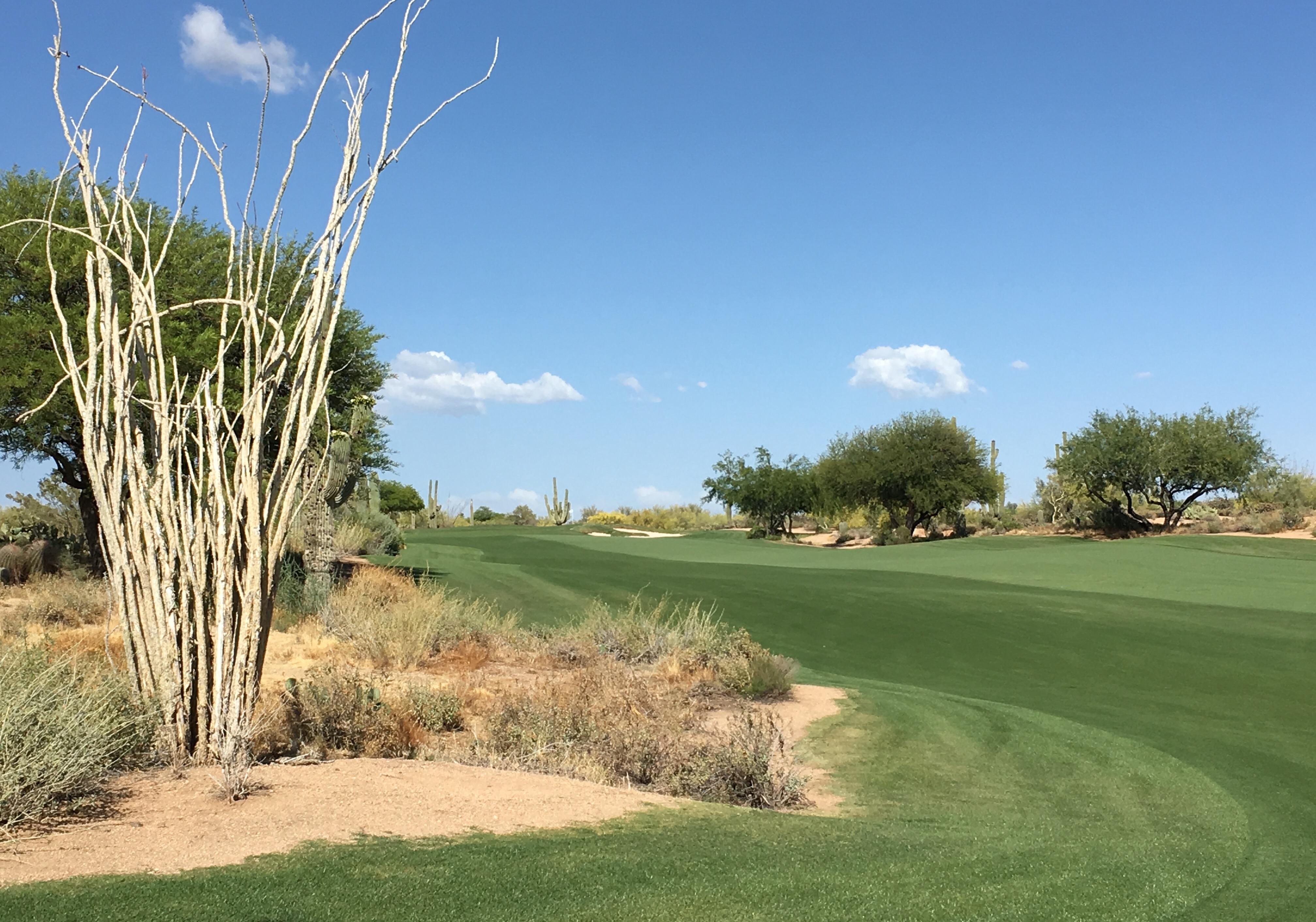 DesertForest5-Approach