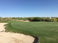 DesertForest7-GreenBack