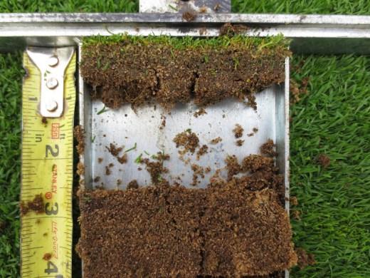 Green root depth in 2014