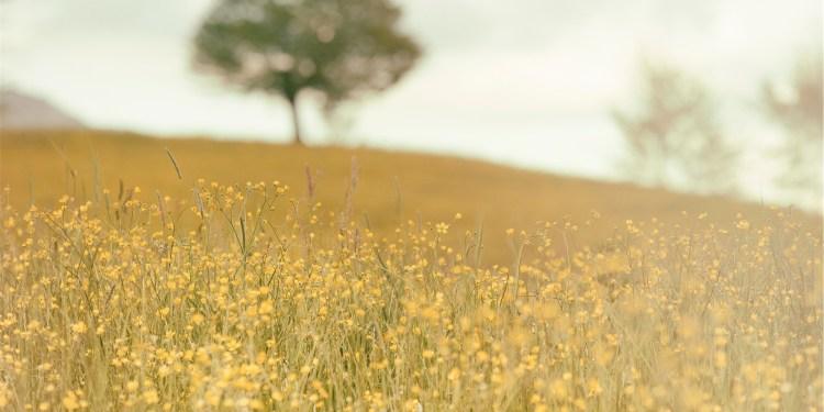 Field-Yellow-Tree