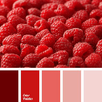 Colour Palette - Raspberries
