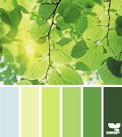 Sun through leaves Colour Palette