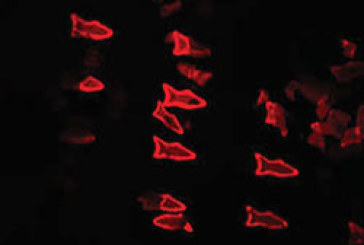 3D Printed 'MicroFish' Injected In Your Blood Could Soon Fight Disease
