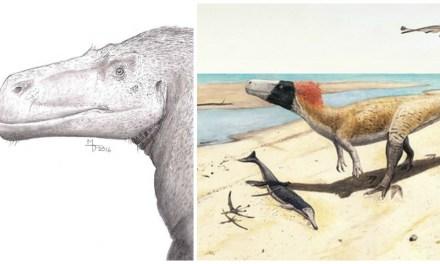 Meet Wiehenvenator albati, the Jurassic Monster from Minden