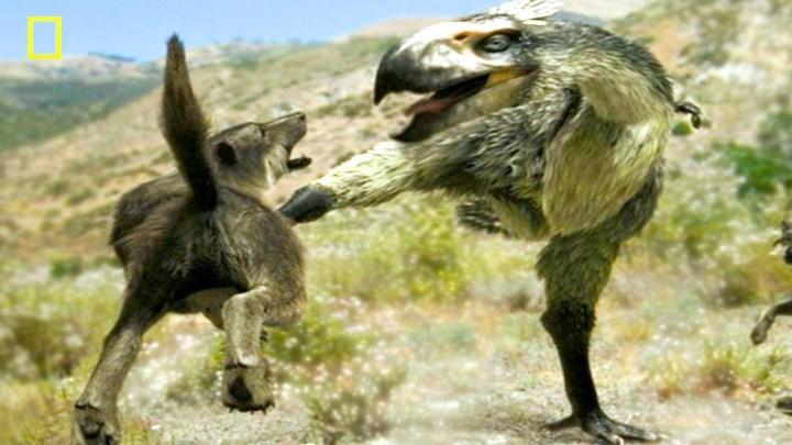 terror bird karate kicking wolf