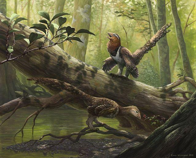 balaur bondoc prehistoric bird