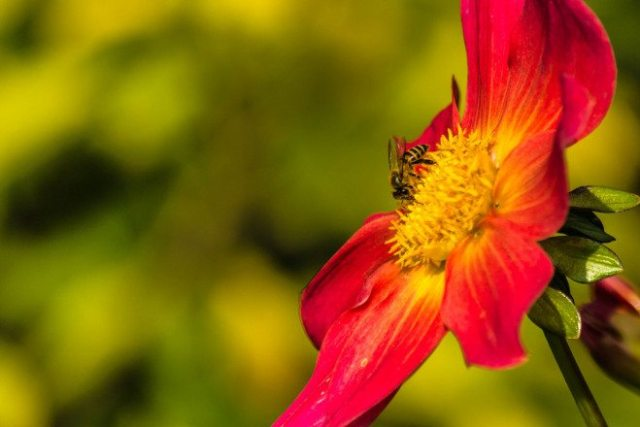 how to help pollinators, save honeybees, do your flowers poison bees,
