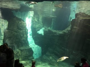 Underwater viewing area at Empire of the Penguin Image: Dakster Sullivan