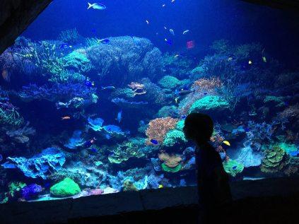 Manta aquarium. Image: Dakster Sullivan