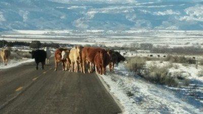 Farmer, anyone? Photo: judy Berna