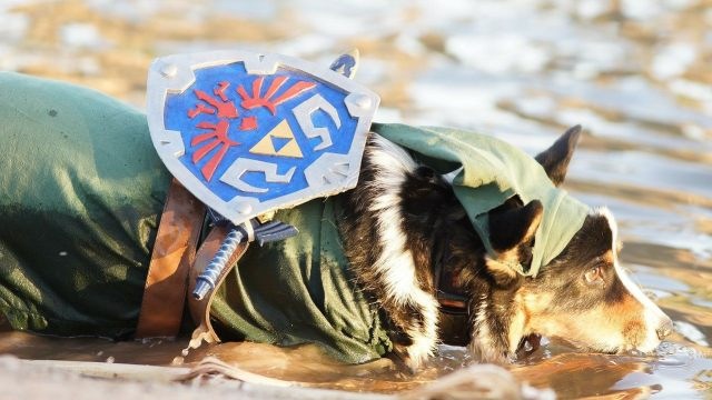 The water in Hyrule is pretty tasty. \ Image: Kiba the Cosplay Corgi