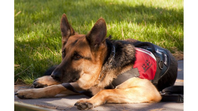 Service dog on the clock \ Image: Pixabay