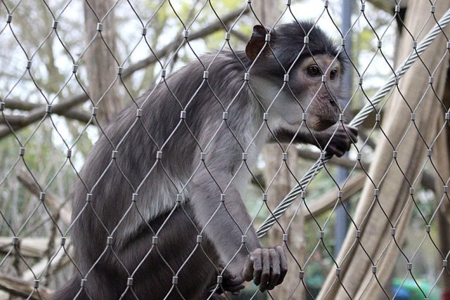 A Friendly Baby Monkey at London Zoo, Image: Sophie Brown