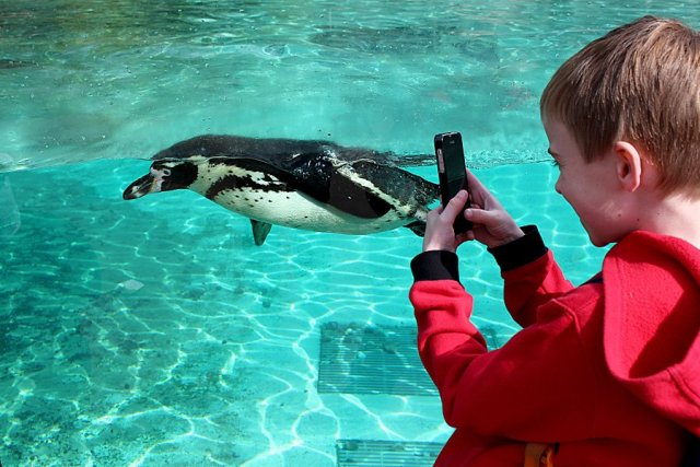 Getting Up Close to a Humboldt Penguin, Image: Sophie Brown