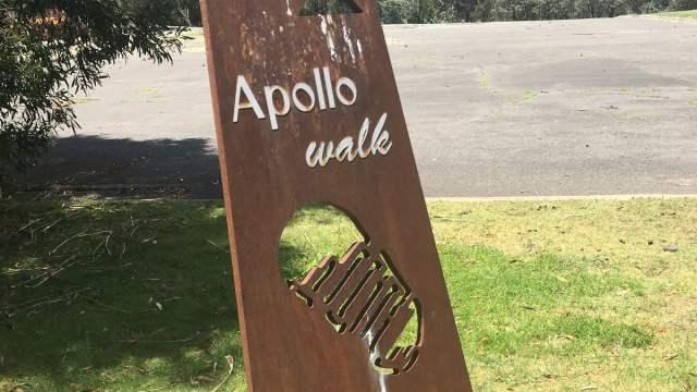 Apollo 50th Honeysuckle