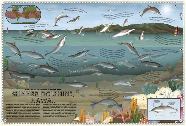 Spinner Dolphins Spread, Image Wide Eyed Editions