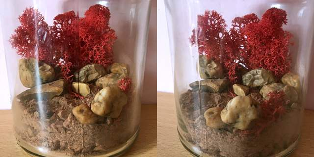 Mars Jar with the Moss Added, Images Sophie Brown