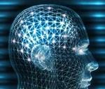 El sueño de modelar el cerebro humano en una computadora es aún muy prematuro