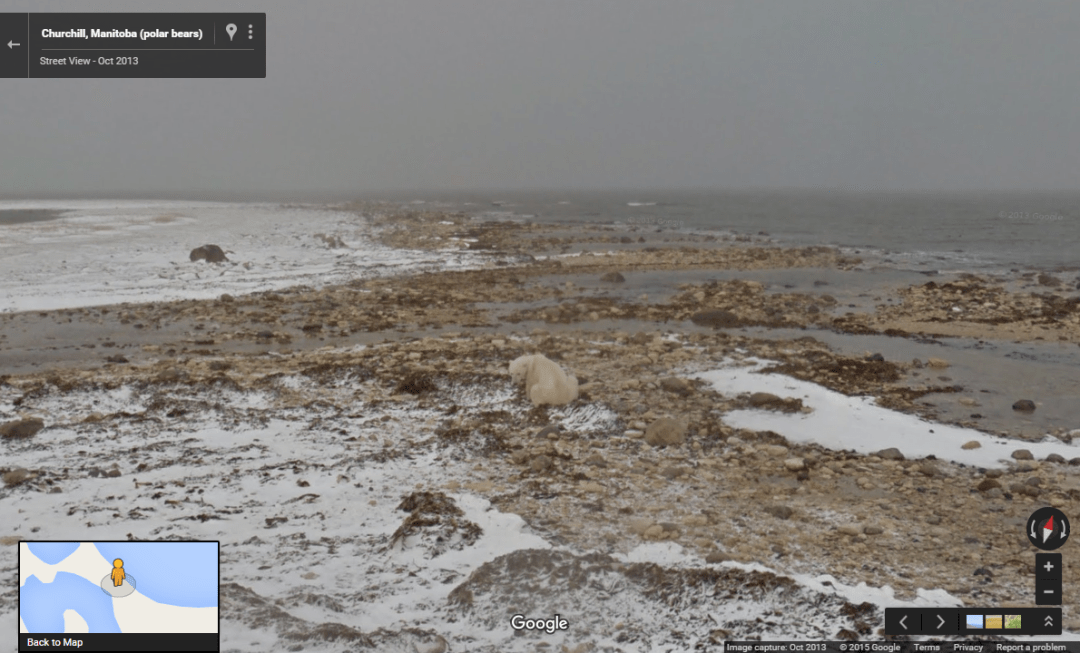 polar-bears-international-churchill-manitoba