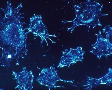 Chip Laberinto - Células Cancerosas - Universidad de Michigan