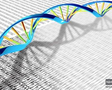Genome Humano
