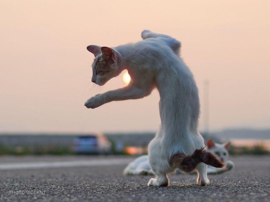 Ninja Cat Photos
