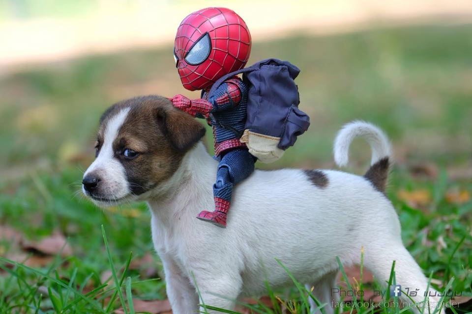 SpiderMan with a Puppy Photoshoot