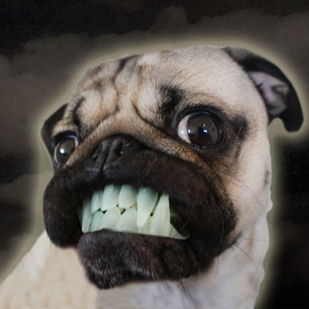 Cute Dog Memes Wallpaper Doug The Pug Halloween Costumes