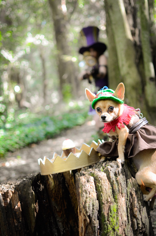 Teemo from League of Legends Dog Cosplay