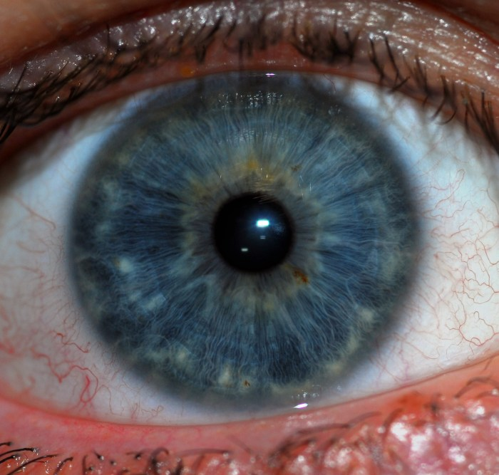 A human (android?) iris. From Wikipedia.