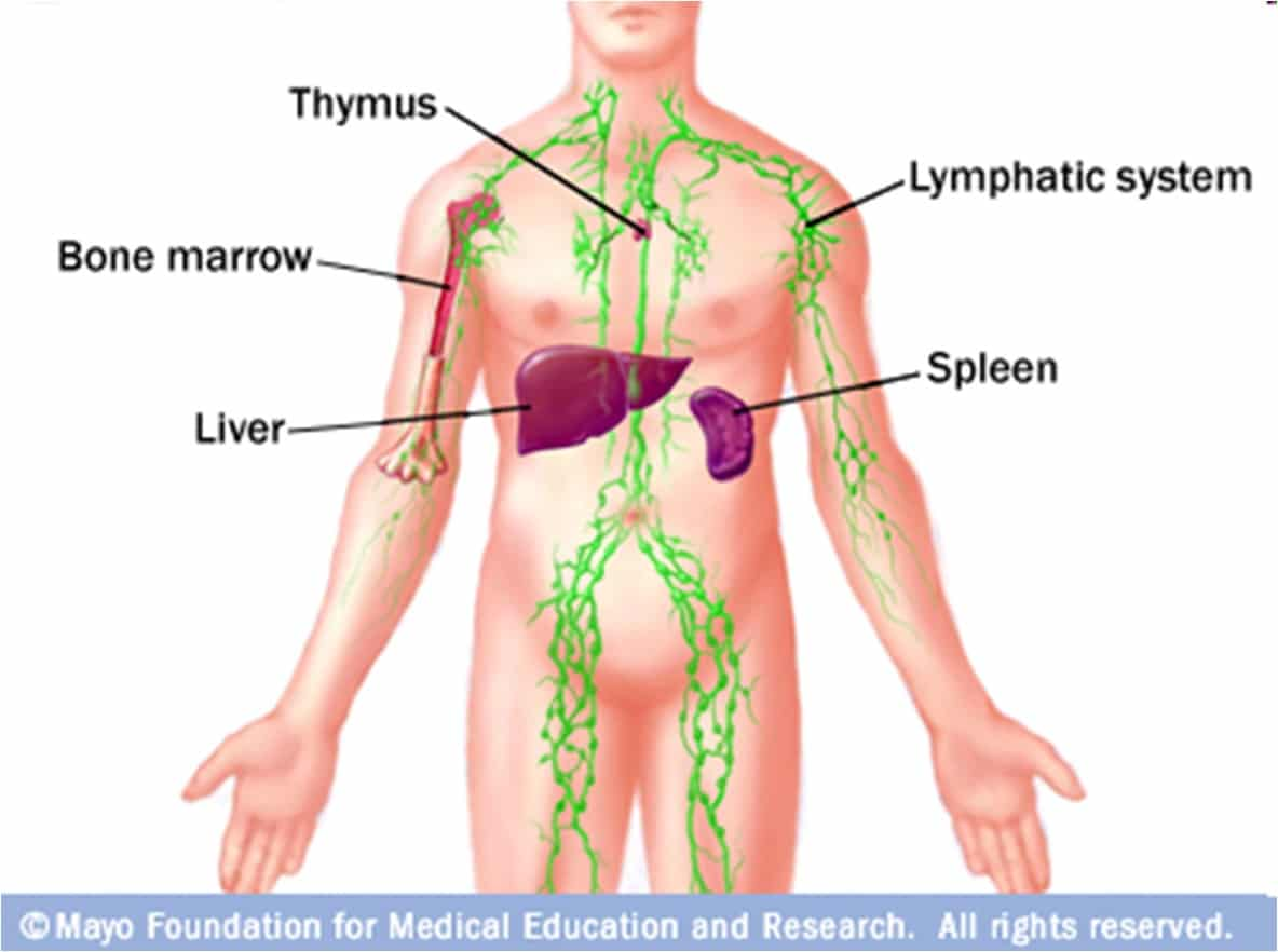 location of lymph nodes in armpit diagram orographic rainfall immune response geeky medics