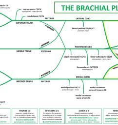 brachial plexus diagram [ 1280 x 905 Pixel ]