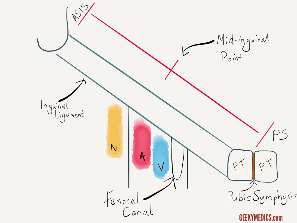 medium resolution of femoral canal anatomy