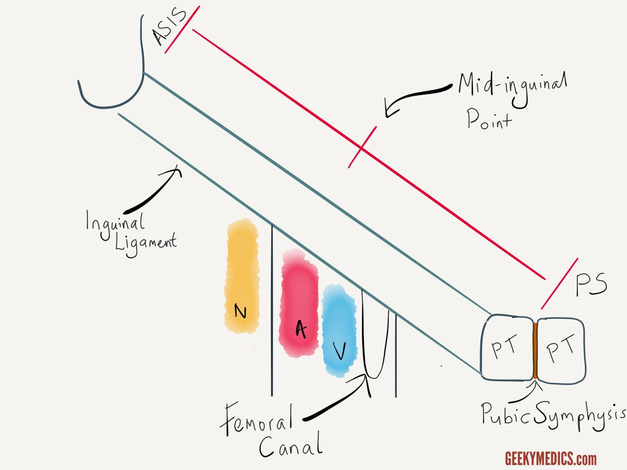 hight resolution of femoral canal anatomy