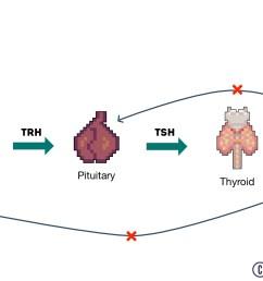 thyroid hormonal axis diagram [ 1280 x 720 Pixel ]