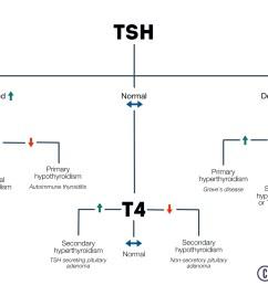 tft interpretation flow chart thyroid function interpretation flow chart [ 1280 x 720 Pixel ]