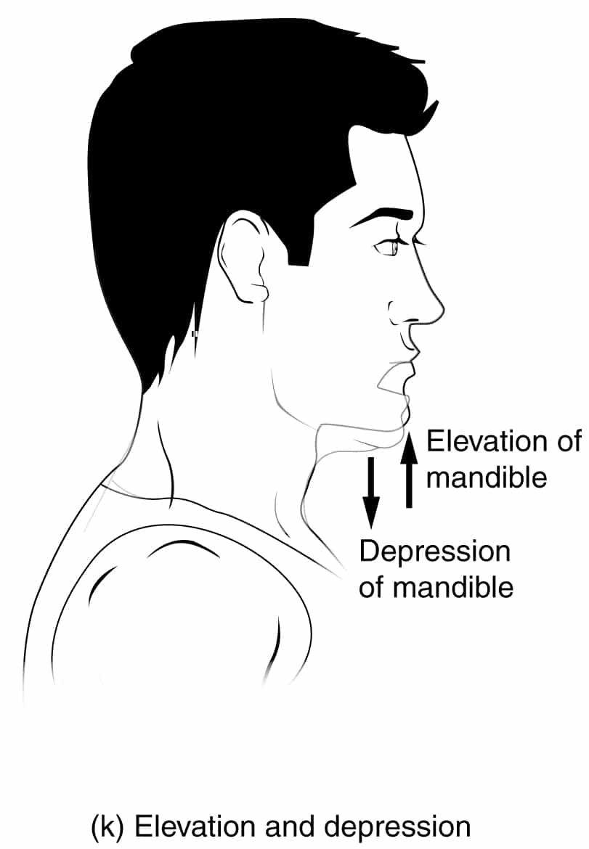 Anatomical Movements of the Human Body   Geeky Medics