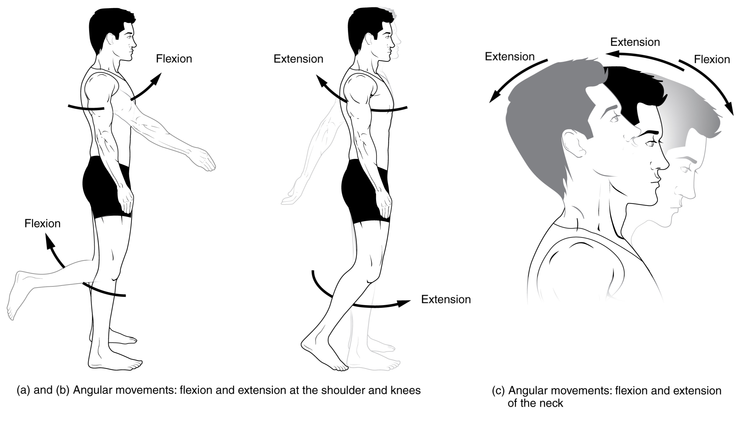 Anatomical Movements Of The Human Body
