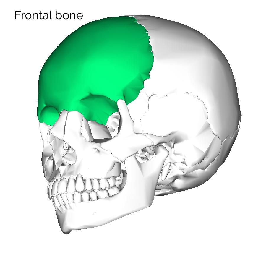 hight resolution of frontal skull bone 3