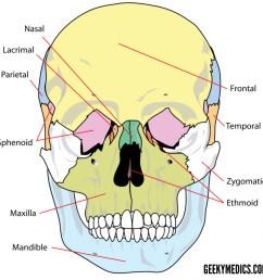 skull bones anterior 2 [ 1280 x 1241 Pixel ]