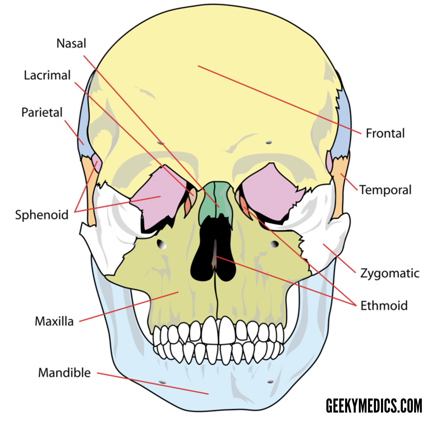 hight resolution of skull bones anterior 2