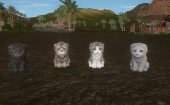 Kitten's Super Adventure, Spyro The Dragon, Cat Game, Kittens, Cats, Play as a Cat, Indiegogo, Kickstarter, Crowd Funding, Kitties with Jetpacks, Multiplayer, Customize Your Kitties, Cute, Kawaii, Adorable, Cute Game, Game with Cats