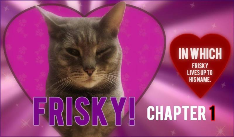 Frisky Lives Up to His Name