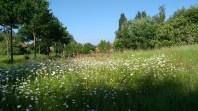 Groene long - zondag geleide wandeling - dag van het park