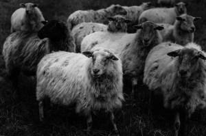 christine, lien, limburg, pieterpad, schapen, selectie website 2.0