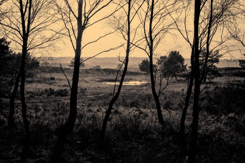 blog nederland, bos, hooge vuursche, loo, wandeling