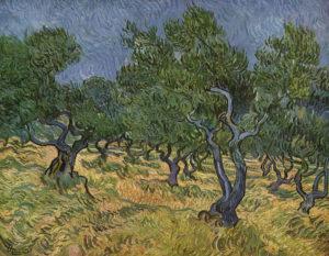 olive-orchard.jpg
