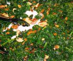 Superfood kale
